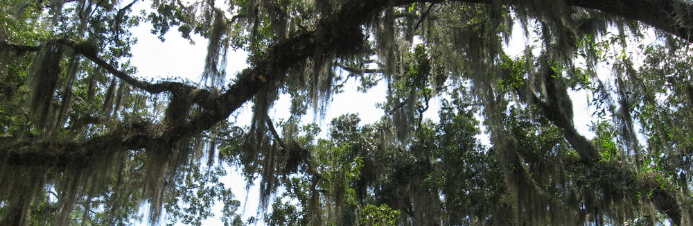 christian science location florida tree moss